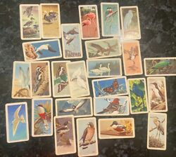 Vintage Brooke Bond Bird Trading Cards From The Early Sixties Lot Of 26