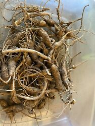 Wild American Ginseng Fresh 8.2 Ounces 18 Year And Older