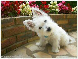 4 Dog West Highland Terrier Puppy #6 dogs puppies Notecards Envelopes