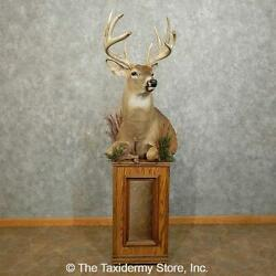 15861 E+ | Whitetail Deer 1/2 Life-size Taxidermy Mount For Sale