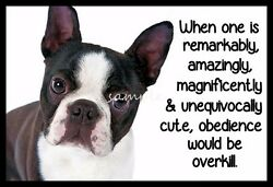 Funny BOSTON TERRIER Obedience is Overkil Refrigerator Magnet 4 x 2.5 inches