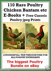110 Vintage Antiquarian Rare Poultry Bantam Chicken Books on Disc DVD Free Jpegs