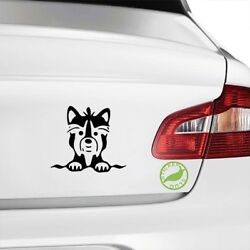 Boston Terrier Decal gloss black 5