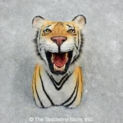 18300 E+ | Reproduction Bengal Tiger Shoulder Taxidermy Mount