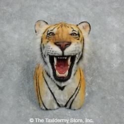 18299 E   Reproduction Bengal Tiger Shoulder Taxidermy Mount