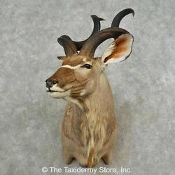 16701 P   Greater Kudu Taxidermy Shoulder Mount For Sale