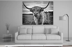 206274 Scottish land cattle breed Cow Decor Wall PRINT US