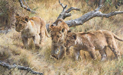 Carl Brenders The Wanderers Young Lions Giclee Canvas Artist Proof A/p2/10