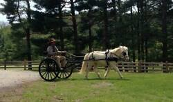 E-z Trail Easy Entry Metal Show Cart With Wooden Wheels Pony Miniature Horse