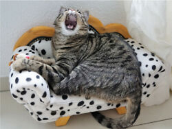Yawning Meowing On Mini Bed Striped Cute Cat Poster Print Paper Or Wall Vinyl