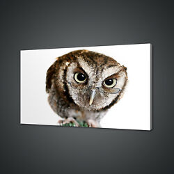 Beautiful Wise Owl With Glasses Box Mounted Canvas Print Wall Art Picture Photo