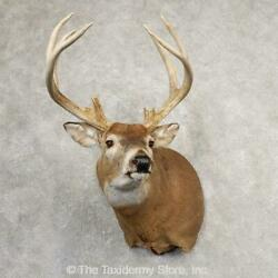 21073 P   Whitetail Deer Taxidermy Shoulder Mount For Sale