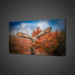 Beautiful Grey Horned Owl Bird Flying Canvas Print Wall Art Picture Photo