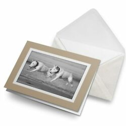 Greetings Card Biege BW English Bull Terrier Dogs #39060