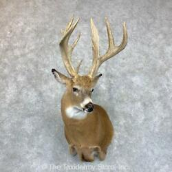 23522 P | Whitetail Deer Taxidermy Shoulder Mount For Sale