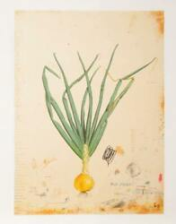 Will Mentor How To Grow An Onion Lithograph And Chine Colle Signed And Number