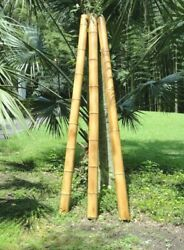 4 Giant Moso Flame Cured Bamboo 2' To 8' Lengths