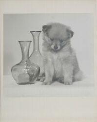Rowena Fruth Silly Chlorobromide Photograph