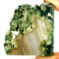 Natural Awesome Designer Green Moss Agate Polished Slab Rough 200.10cts.