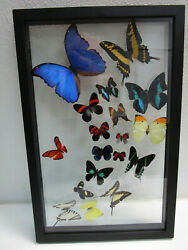 Real Insect Butteryfly Collection In Wood Hanging Box - Neat