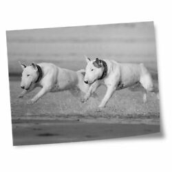 8x10quot; Prints No frames BW English Bull Terrier Dogs #39060