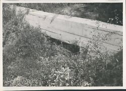 1963 Photo Eastlake Sewer Cement Wall Trees Brush Leaves Grass Crawlspace