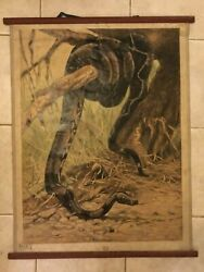 Original Vintage Zoological Pull Down School Chart O A Boa Constrictor Litograph