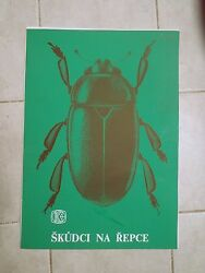 Original Vintage Pull Down School Chart Of Pests On Rape 13 X Posters
