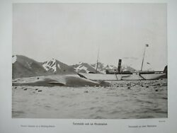 Tourist Steamer At Whaling Station Norway Antique Print Wilse 1910