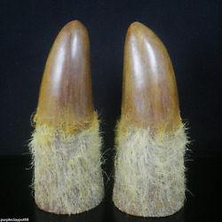 9.4 China Old Collection Ox Horn Hand Carving Antique Ox Horn Tip Exorcism