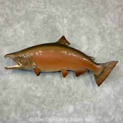 21610 Wc| 50.25 Reproduction Spawning Chinook King Salmon Taxidermy Fish Mount