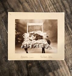 Antique Photo Gorgeous Cat Lounging On A Pillow And Chair Turner Maine 1900s Idand039d