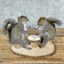 25227 E   Poker Squirrel Taxidermy Mount Set For Sale