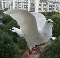 Real White Pigeon Taxidermy Stuffed Figure Unique Skull Wild Animal Collectibles