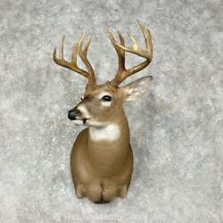 25398 P+ | Whitetail Deer Taxidermy Shoulder Mount For Sale
