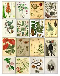 Vintage Botanical Tree Seed Birds Flowers Prints Posters Wall Antique Art Decor