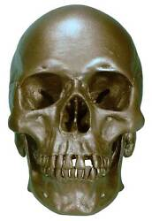 Human Skull Replica 3093-bronze Metallic Color Life Size Direct From Usa