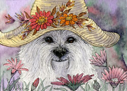 West Highland terrier Westie dog in hat orig ACEO mini painting by Susan Alison