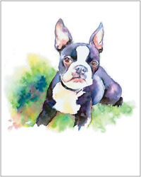 Boston Terrier Dog Pet Portrait fine art watercolor print 8x10