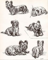 DOG Skye Terrier Dogs Sketched Views Beautiful Art Print 1930s