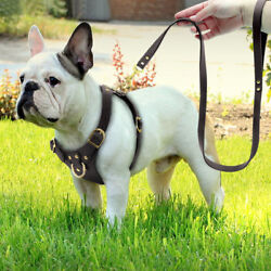 Safety Front Leading Leather Dog Harness and Leash Set with Gold Snap Brown