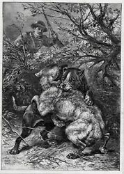 Dog Pit Bull Terrier Fighting Wolf as Hunter Watches Large 1880s Antique Print