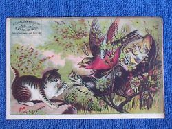 A.S.T.Co. Children#x27;s Shoes Cat Attacks Bird Family Living in Old Shoe Trade Card