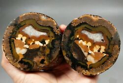 A Pair Roughunpolished Agate/achat Nodule Specimen Xuanhua Hebei China Xh-048