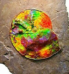 EBAY SALE AMMONITE FOSSIL MASTERPIECE ART DECOR DISPLAY RARE LUXURY AMMOLITE #1