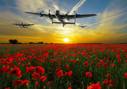 Avro Lancasters Over Sunset Poppy Fields Canvas Prints Various Sizes