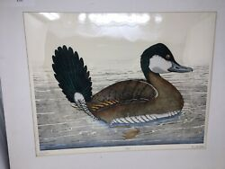 Dan Mitra Original Hand Colored Etching Pintail She Duck 179/350 Signed Numbered