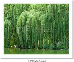 Weeping Willow Tree Art Print / Canvas Print. Poster, Wall Art, Home Decor