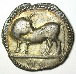 Greek Lucania Sybaris Ar Stater Bull Coin 550 Bc. Certified Ngc Vf Certificate