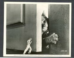 GIANT CAT ATTACKS INCREDIBLE SHRINKING MAN EXC CON SCI FI UNIVERSAL